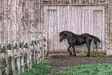 Horse In Barnyard 20130510