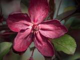 Red Blossom DSCF02202