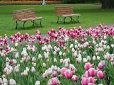 2013 Canadian Tulip Festival DSCF02329