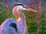Great Blue Heron DSCF03189 Art