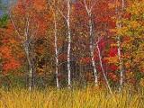 Autumn Trees 20130922