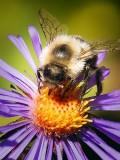Busy Bee DSCF09109