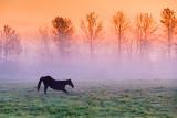 Misty Morning Stretch 20130927