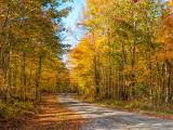 Autumn Backroad DSCF09774