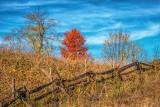 Autumn Landscape DSCF09956
