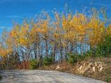 Autumn Roadside DSCF10127