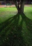 Tree Shadow 20131014