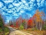 Autumn Back Road DSCF10496-8