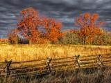 Autumn Trees 20131027