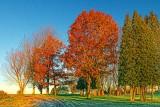 Autumn Trees At Sunrise 20131104