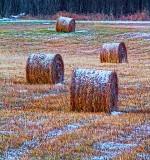 Frosty Bales 20131124