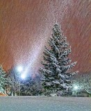Snowy Pine 39833