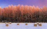 Bales & Trees At Sunrise 40191
