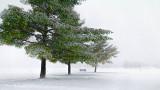 Three Trees & Bench In Fog 20131202