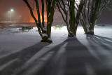 Three Trees & Benches 20131203