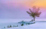 Bench & Tree In Winter Sunrise Fog 40900