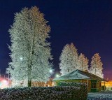 Frosty Trees 40924-5