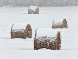 Snowy Bales In Snow Covered Field During Snowstorm DSCF12378