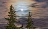 Moon Over Pines 41771