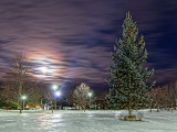 Pine At Night 41781