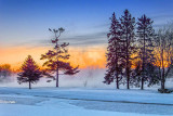 Pines At Sunrise 20140121