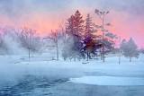 Pines In Mist At Sunrise DSCF12823
