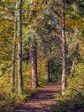 Nature Trail DSCF09756