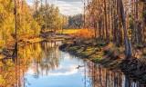 Florida Landscape 2457