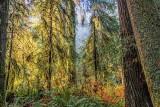 Coastal Forest 22745