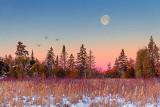 Sunrise Moon Over Pines 42544-5