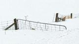 Deep In Snow 42612