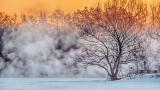 Tree Beside Misty Canal At Sunrise DSCF13906-8