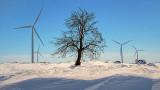 Tree Between Turbines DSCF13945