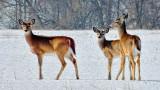 Three Deer DSCF13970
