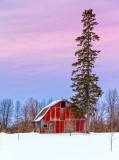 Barn & Tall Pine 43389-93