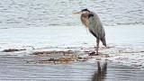 Heron On Ice-1000mm (DSCF14347)