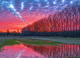 Trees In Sunrise 20140429