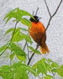 Baltimore Oriole P1030844 Art