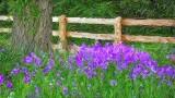 Fence & Flowers P1040219-21 Art