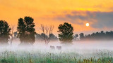 Foggy Sunrise 20140708