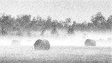 Bales In Misty Sunrise (Pencil) P1070095-7 Art