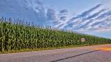 Wall Of Corn P1070686-8