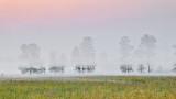 Trees In Sunrise Ground Fog P1070785-7
