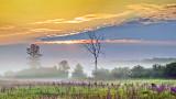 Misty Sunrise 20140804