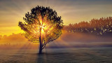 Lone Tree In Misty Sunrise 20140825
