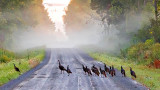 A Rafter Of Turkeys 20140901