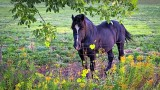 Equine Pal 20140910