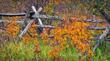 Fall Fence 20140923