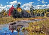 Autumn Marsh P1100418-20