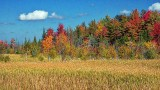 Autumn Landscape DSCF18598-600